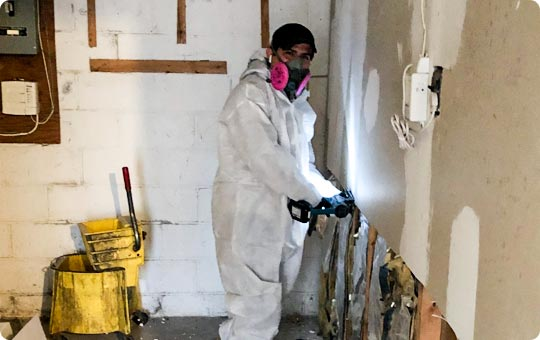 Mold Remediation Process